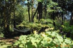 Secret Places Near River